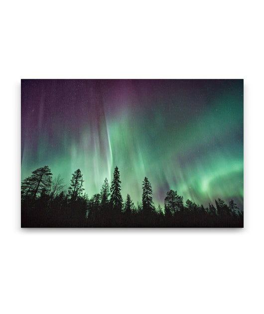 Mystical Forest Canvas Art Prints