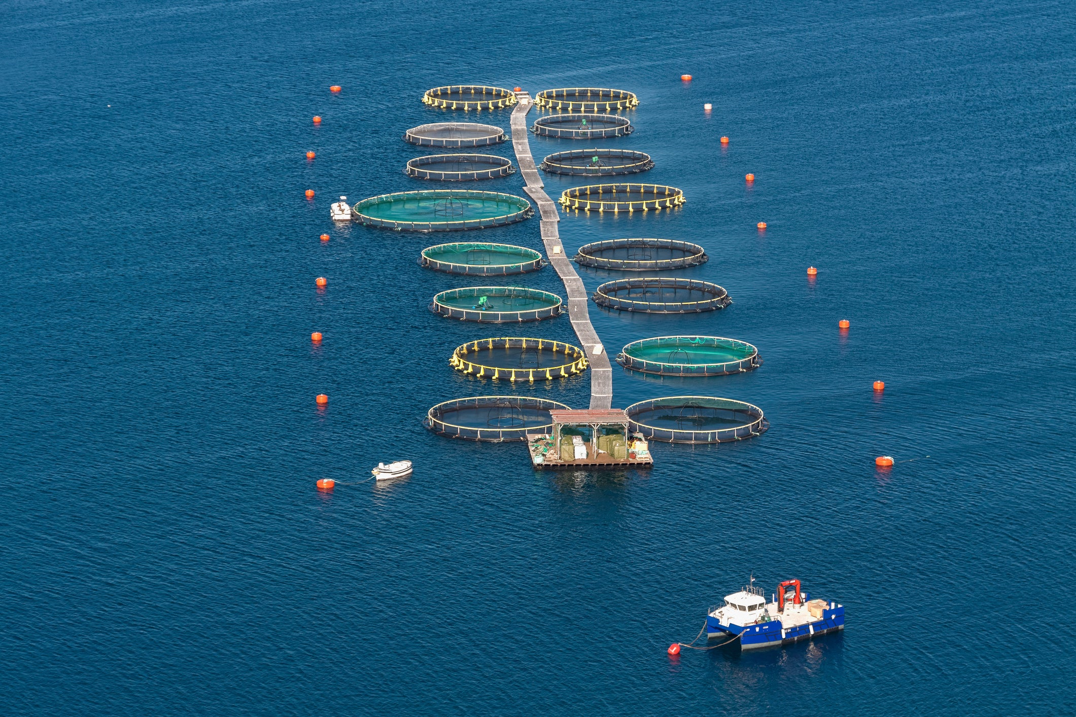The Pros and Cons of Aquaculture as a Solution for Overfishing