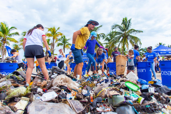 Matheson Hammock Shoreline Cleanup
