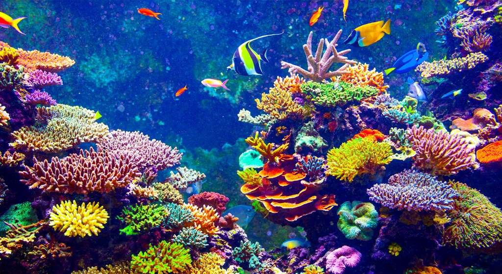 "Coral Reefs May Need ""Radical Intervention"" to Avoid Total Destruction"