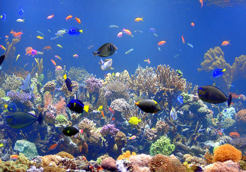 15 Facts You Probably Didn't Know About Coral Reefs