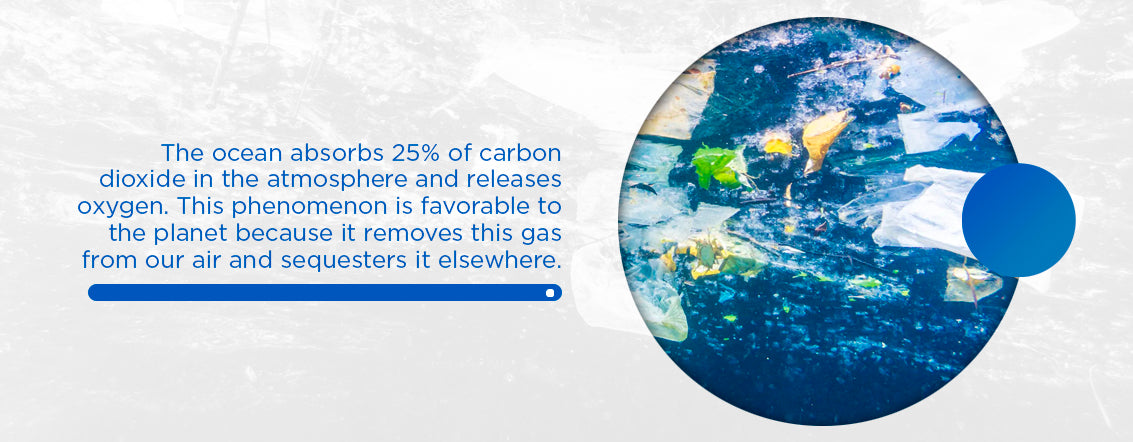 ocean absorbs 25% of carbon dioxide