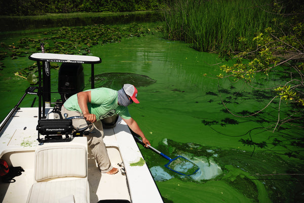 Toxic Algae Invades Florida Waters