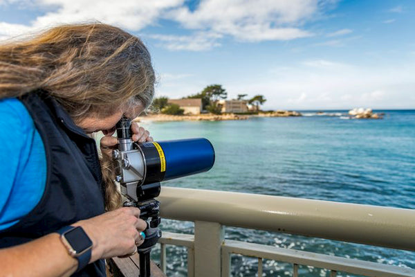 Monterey Bay Aquarium keeping watch for injured or ill southern sea otters