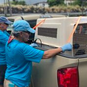 Release of Hawaiian Monk Seal