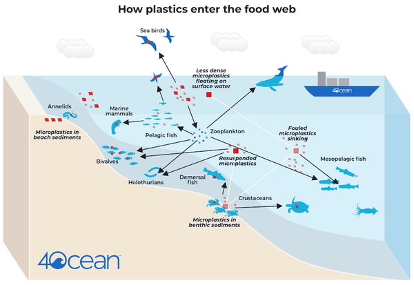 Microplastics in the food web