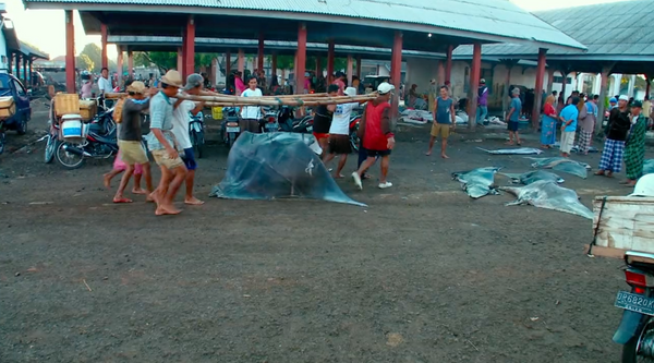 Dead Manta Rays Heading for Market