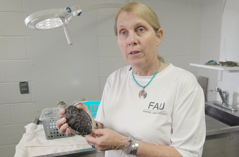 Dr. Jeanette Wynekan from the FAU Marine Research Lab Talks about Sea Turtle Research