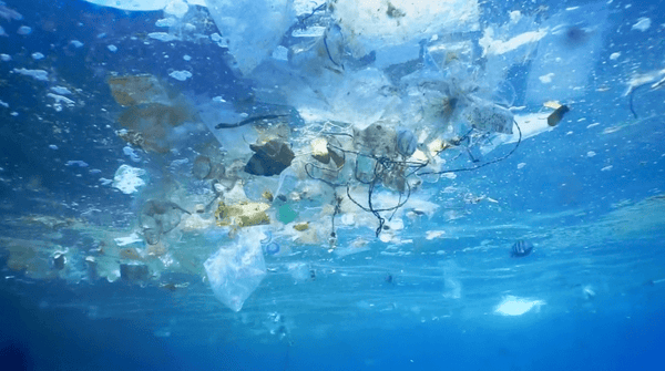 Plastics and Microplastics in the Ocean