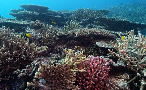 Great Barrier Reef Seascape