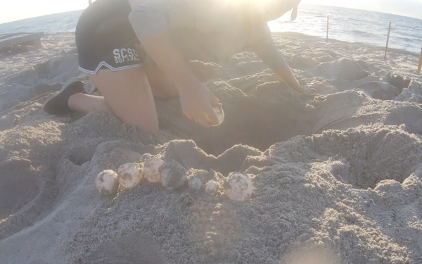 FAU Marine Research Lab Collecting Leatherback Eggs for Study