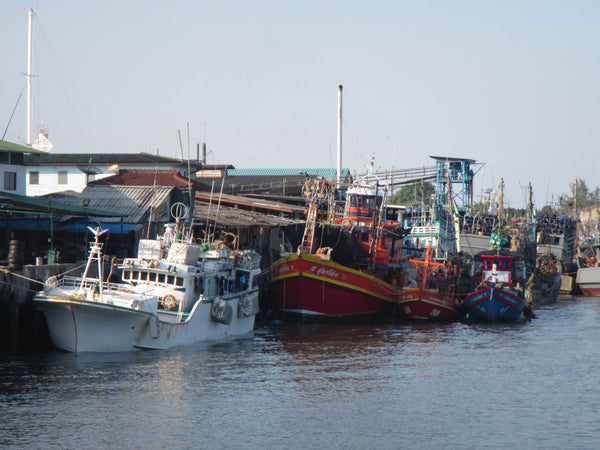 4ocean Seahorse Bracelet - Typical Bottom Trawlers at Port in Thailand