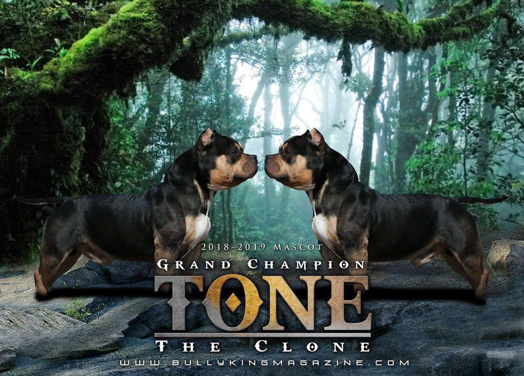"ISSUE NO. 15: GRAND CHAMPION TONE ""THE CLONE""-BULLY KING Magazine"