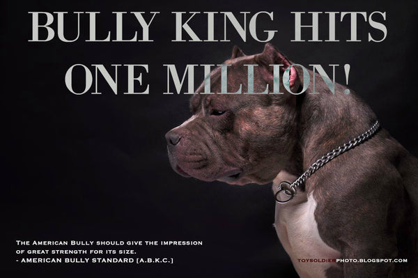 BULLY KING | 1 MILLION SHARES