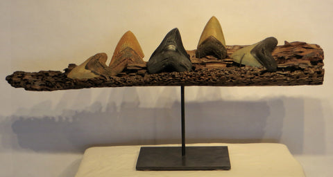5 Megalodon Sharks Teeth on a Driftwood and Forged Steel Base
