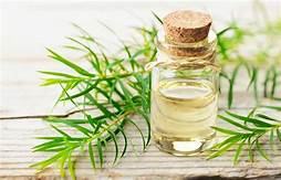 (AAA) Australian Tea Tree Essential Oil