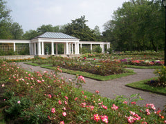 The Rose Garden in Buffalo, NY; where Oouey and Olga Gooey Live...