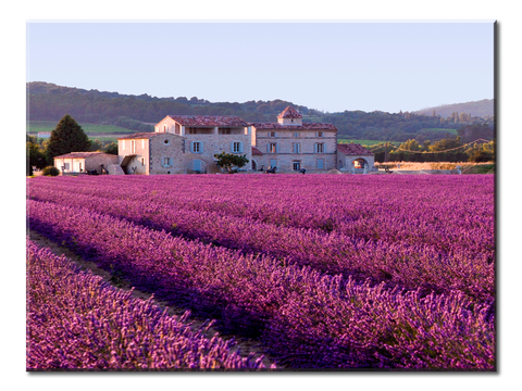 Lavender Field in France Canvas Wall Art - Large One Panel