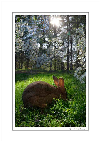 Handmade Art Card- Willow Rabbit