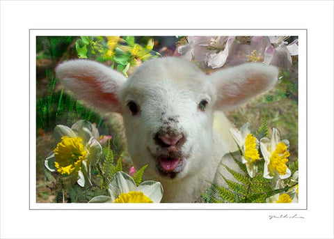 Handmade Art Card- Molly Lamb in Spring
