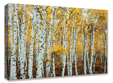 CNV234 Aspen Grove Yellow 24x36