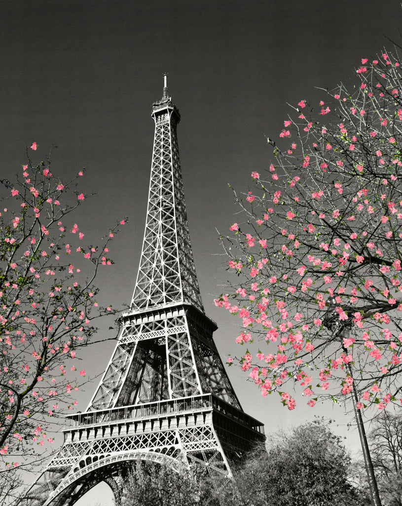 MP781 Paris Blossom 16in x 20in