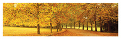 NY660 - Autumn Leaves, 12 x 36