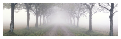 NY662 - In The Mist, 12 x 36