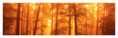 NY665 - Morning Mist, 12 x 36