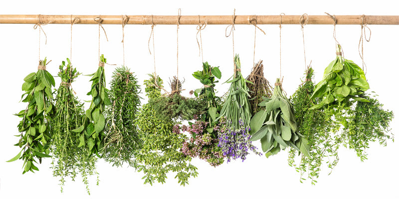 herbs-winter wellness