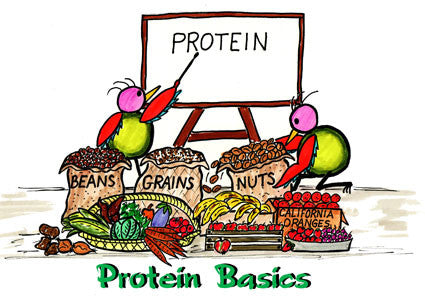 Power of the PROTEIN