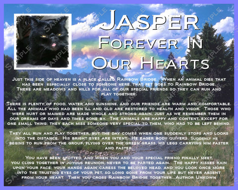 PERSONALIZED Cat Pet Memorial 8 X 10 Print Rainbow Bridge Poem Cat Memorial