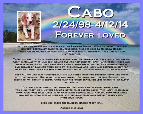 Pet Memorial Rainbow Bridge Poem for Pet Dog Cat 8 X 10 Print