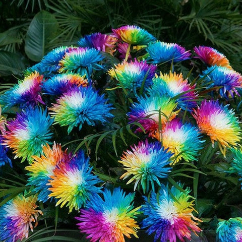 Collections my favorite shop online for Rainbow flower seeds