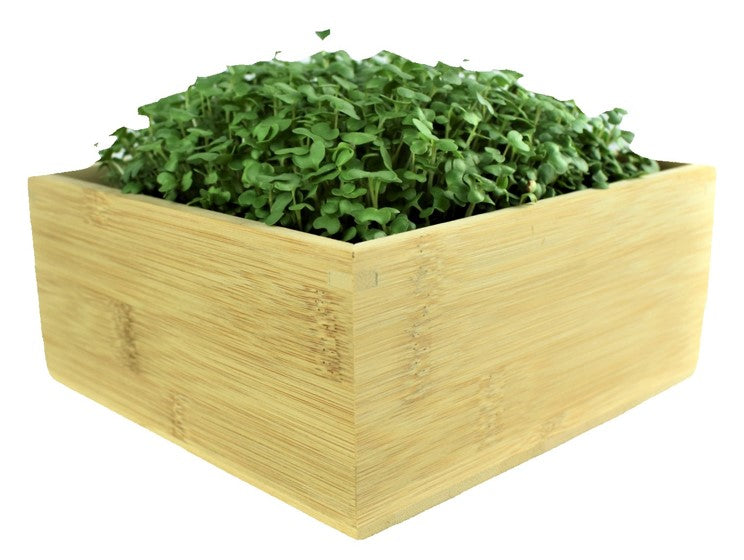 Microgreens Desktop Grow Kit