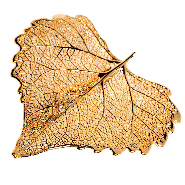 Gold-plated Cottonwood Leaf Brooch from the Brooches collection at Argenteus Jewellery