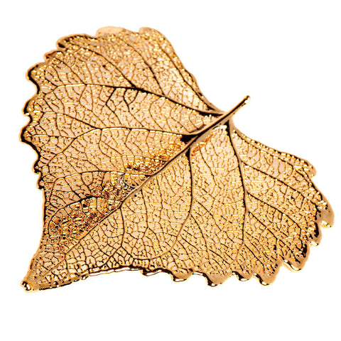 Cottonwood Leaf Brooch Gold Plate