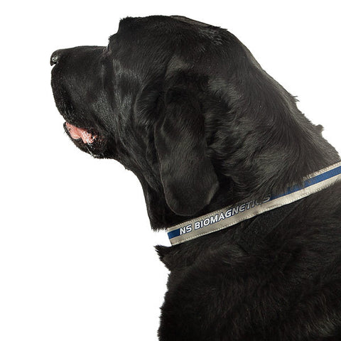 Magnetic Pet Collar