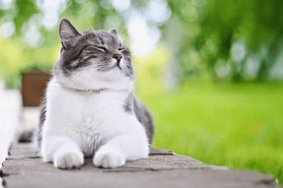 Healthy Cats, Happy Cat Parents: Feline Health 101