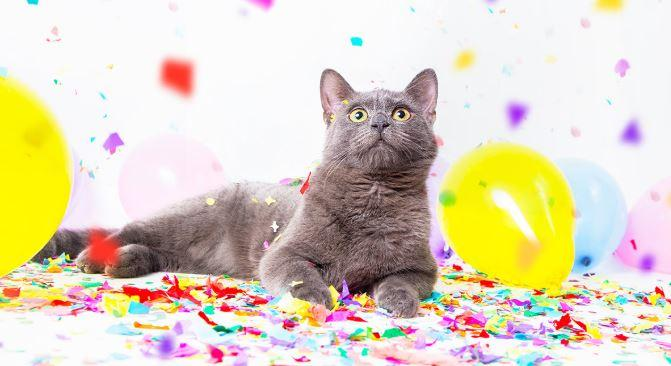 6 Fun Gift Ideas for Your Cat's Birthday