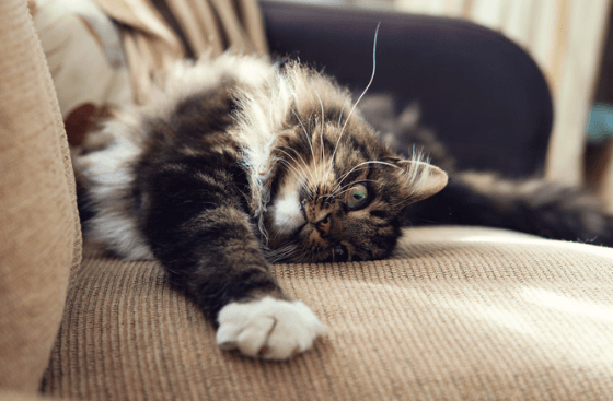 5 Things to Look for When Shopping for Cat-Friendly Furniture