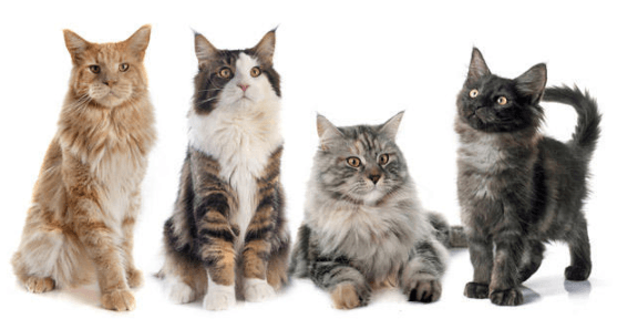 What to Know About Cat Sizes when Picking a Pet Cat
