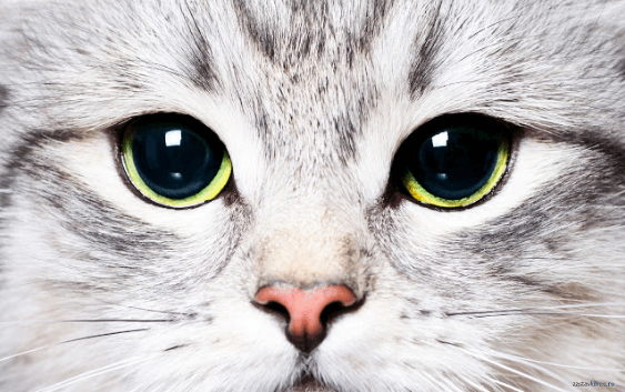 All You Need To Know About Cat Rabies