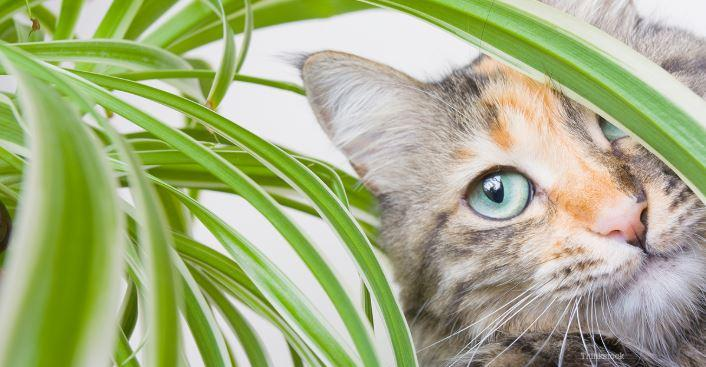 Are Plants Toxic to Cats?