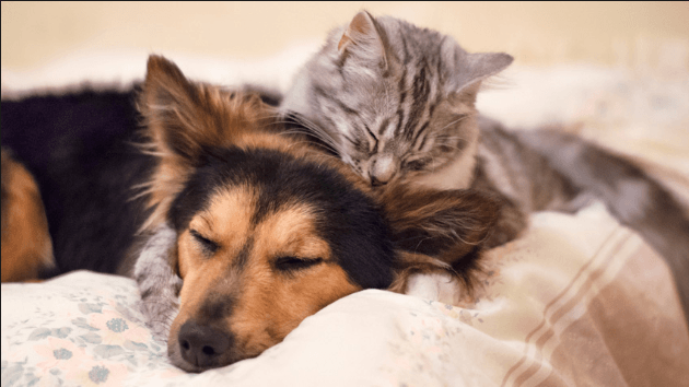 Tips for Getting Pet Cats and Dogs to Get Along