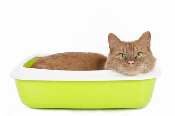 Giving You the Scoop on Pine Cat Litter