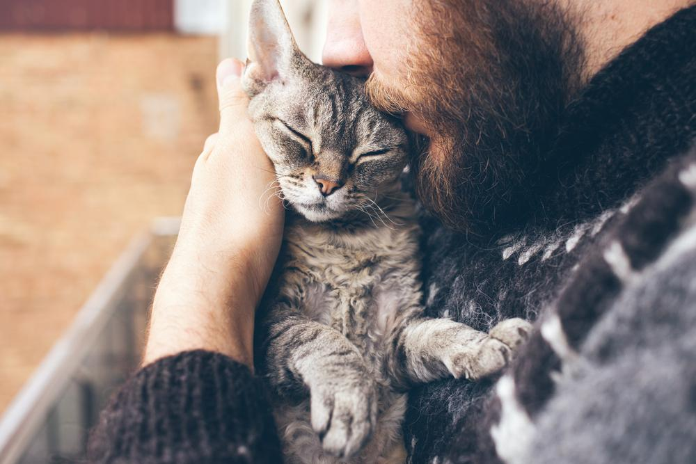 5 Ways to Love and Appreciate Your Cat on National Hug Your Cat Day!