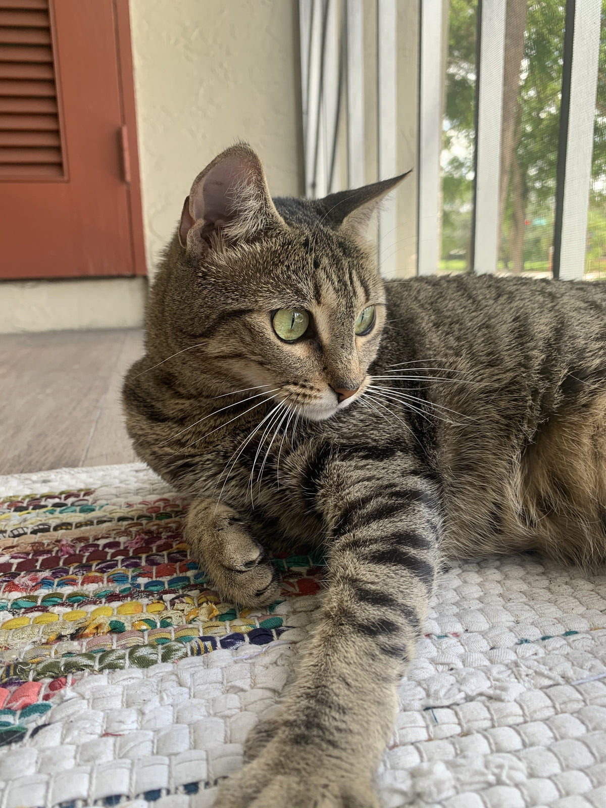 August Cool Cat of the Month: Meet Dixie!