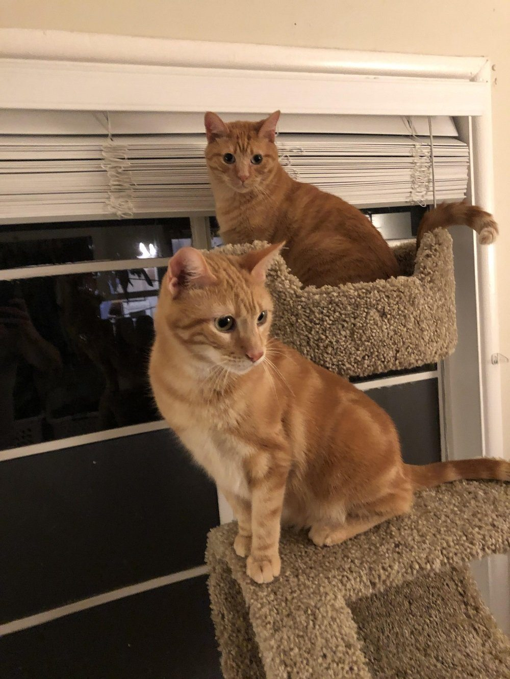 Cooper and Truman - Cool Cats of the Month