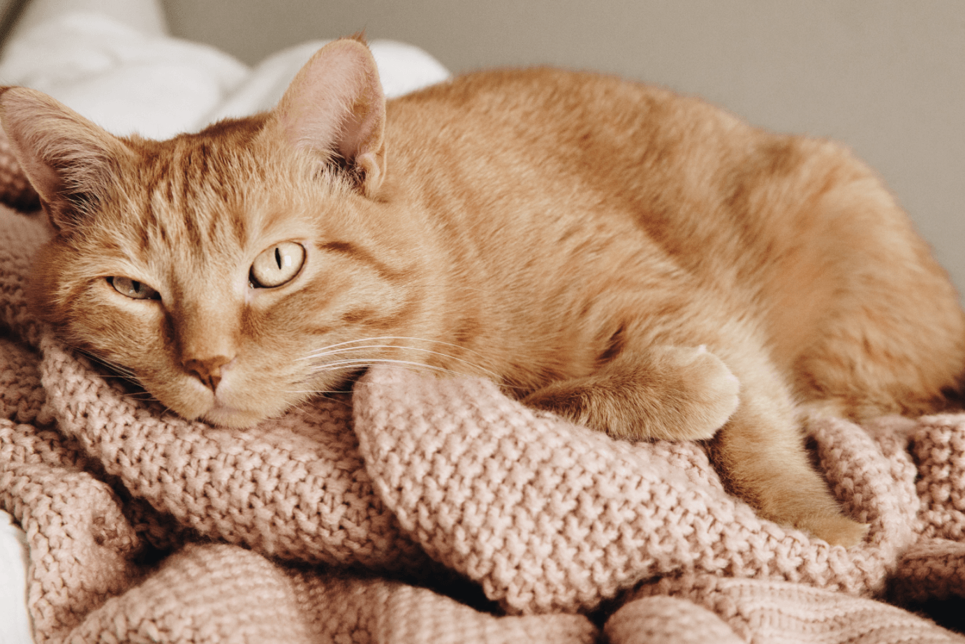 Is Your Kitty Allergic to Cat Litter?